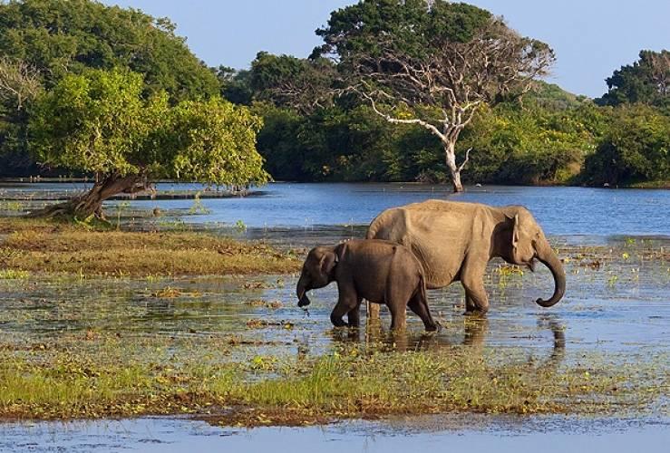 Elephants in Yala National Park