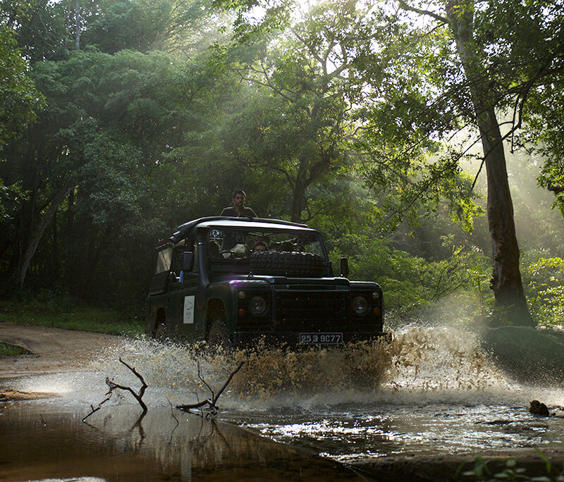 Enjoy a Jeep Safari in Sri Lanka